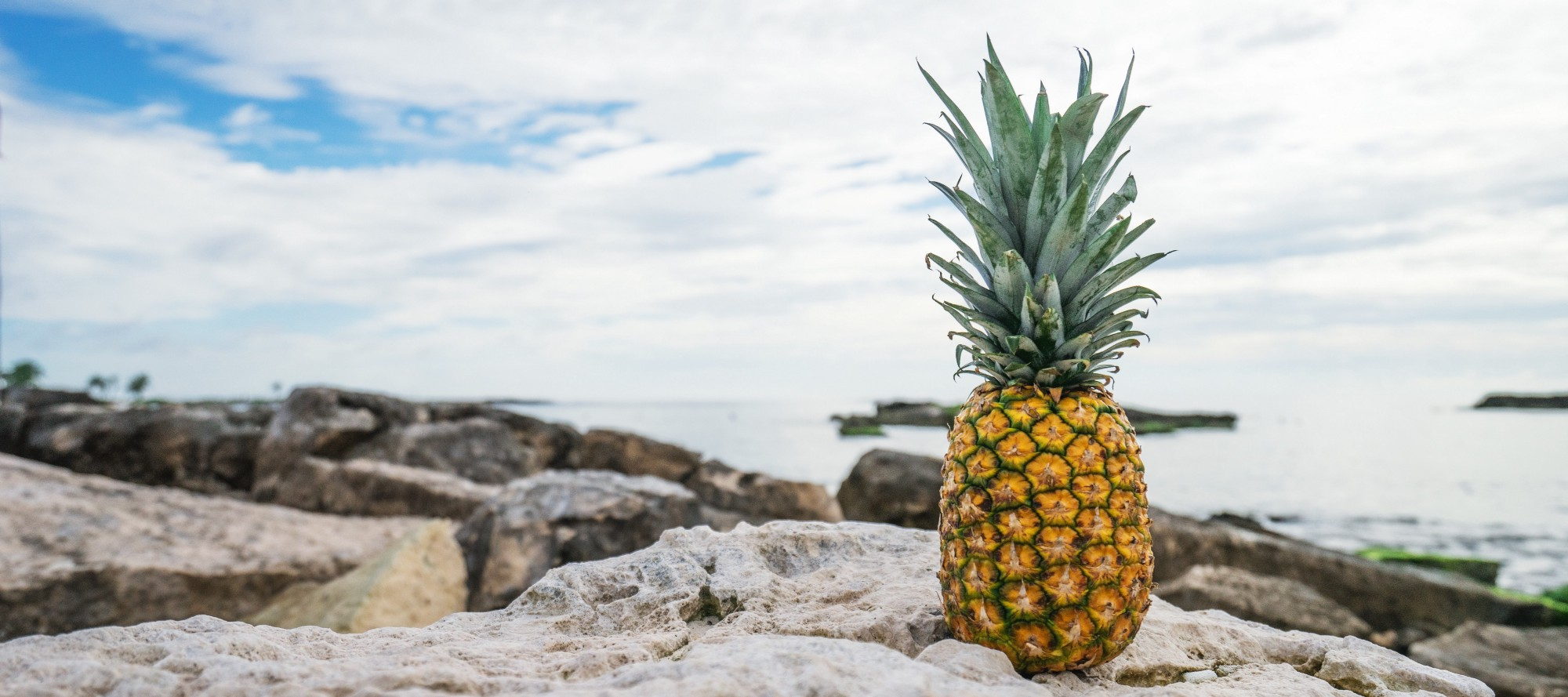 Legend Of The Pineapple All Southern Things