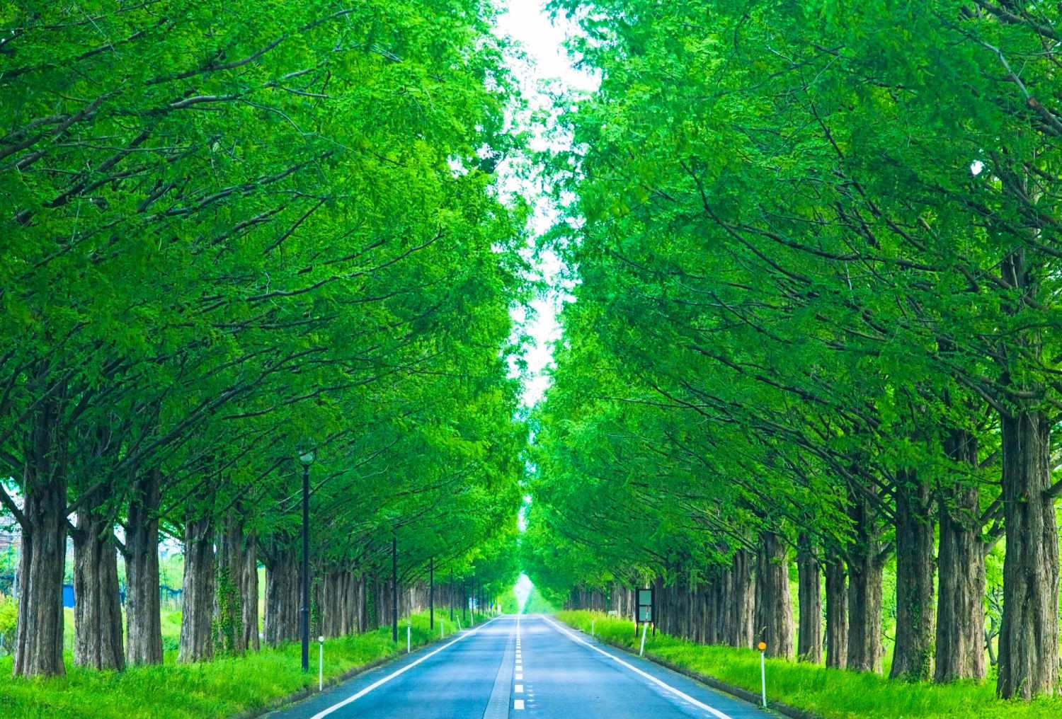 5 Scenic Driving Roads in Japan vol:2 – JW Web Magazine for Straight Road With Trees  131fsj