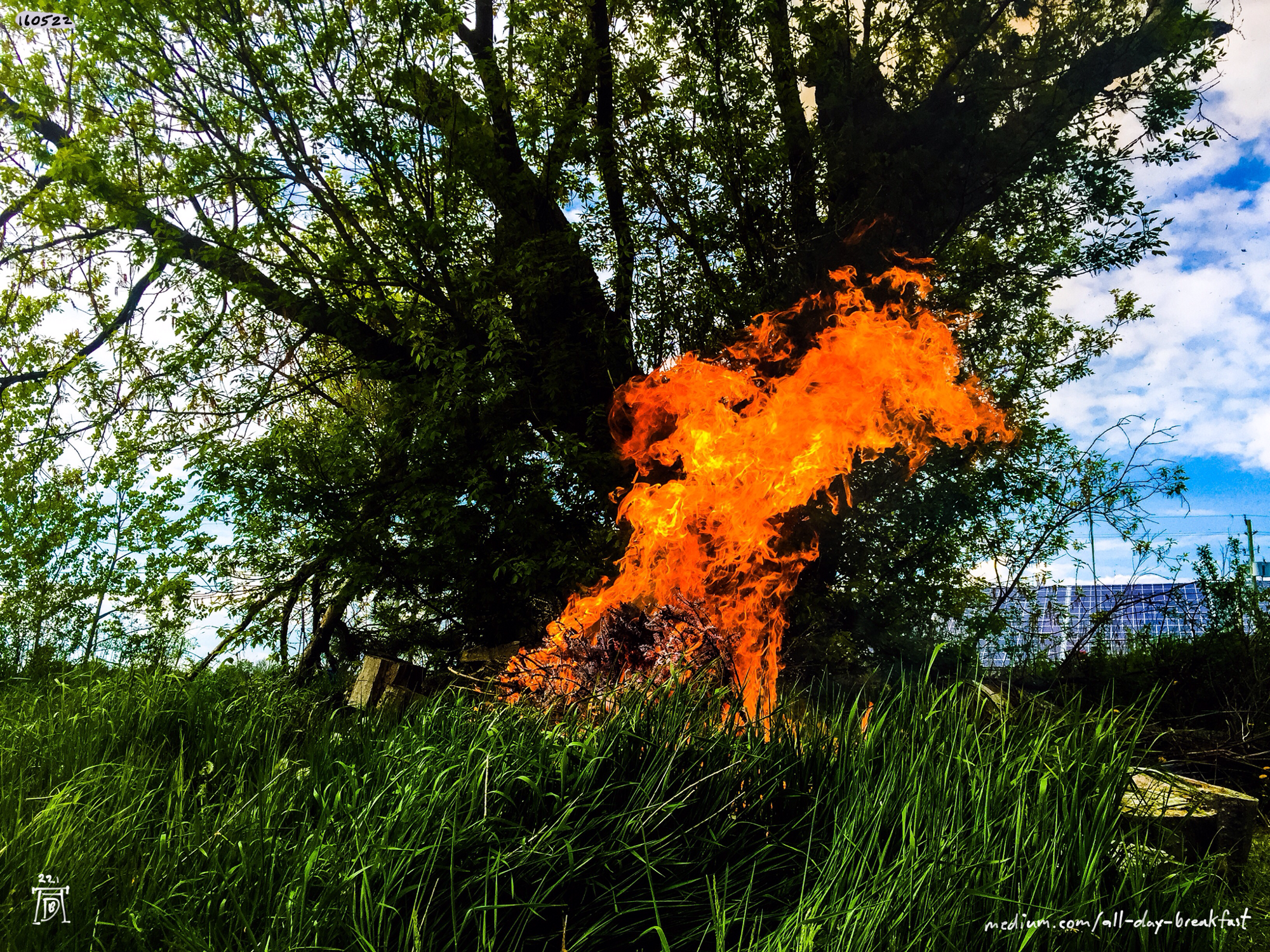 Burning dead wood (#OneFootInBothWorlds)