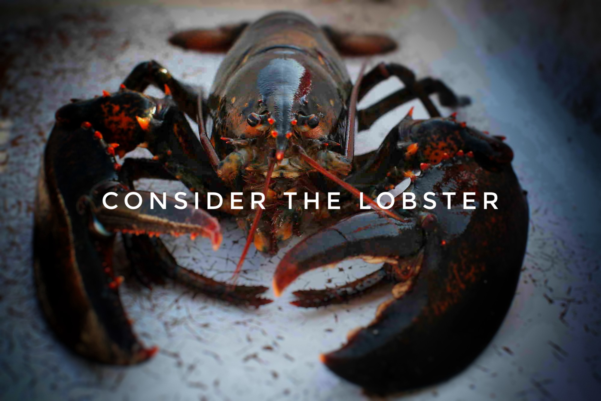 consider the lobster d Consider the lobster: a summary david foster wallace's 2004 article consider the lobster, originally published in gourmet magazine, investigates a topic not generally covered by such publications—the sensations of one of the animals who becomes our food.