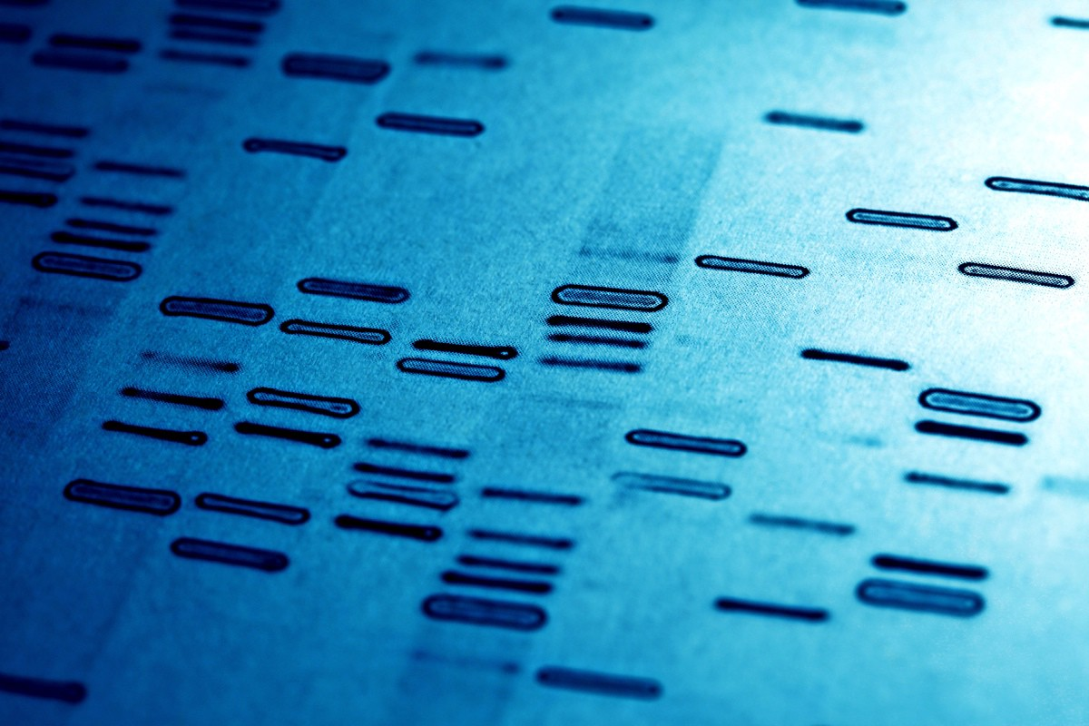 which is not an application of dna fingerprinting