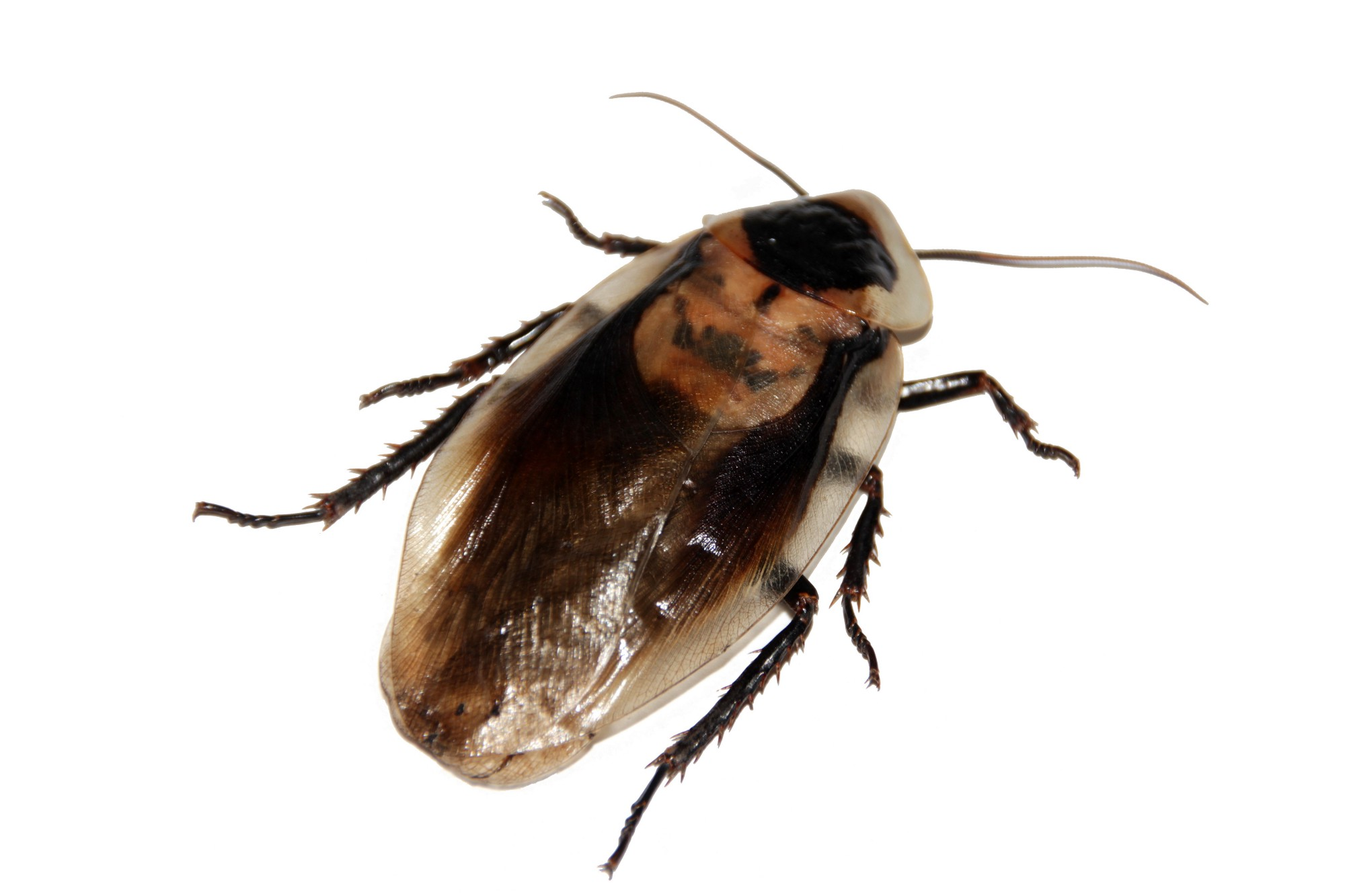 If People Were Cockroaches, Adapting to Climate Change Would Be Easy