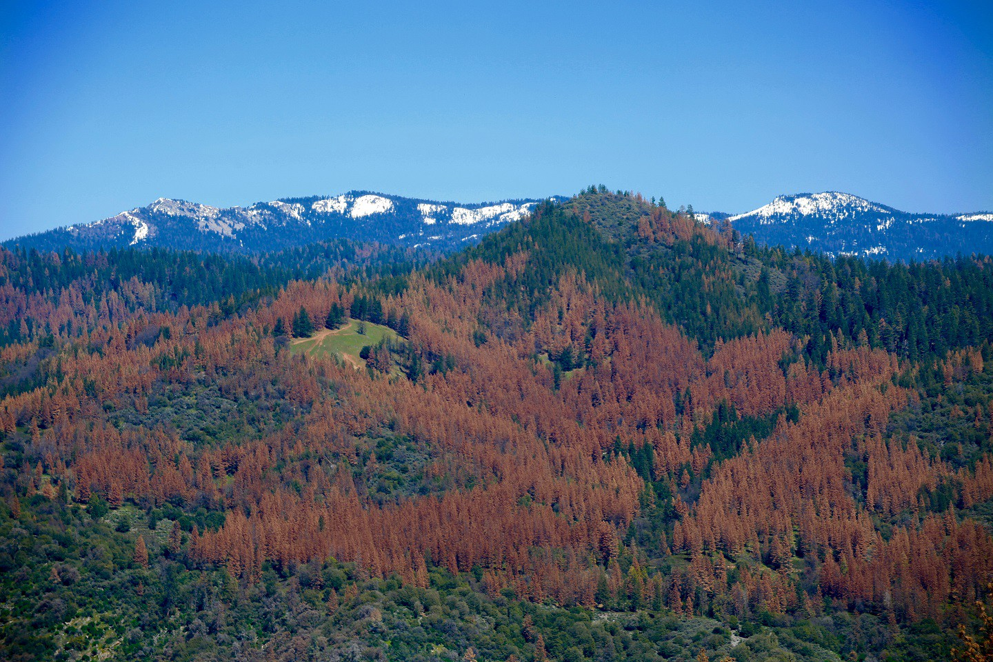 The warm glow of death: the terrifying climate truth behind California's fall forest colors