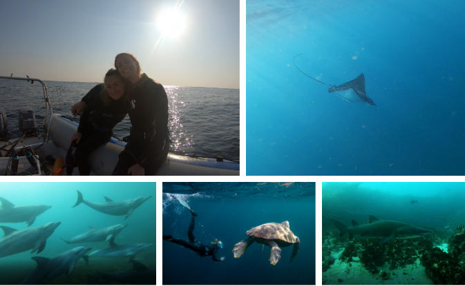 All photos by Stephan Kirsten from Cape Town Free Diving, except the bottom middle photo which was by Temujin Johnson