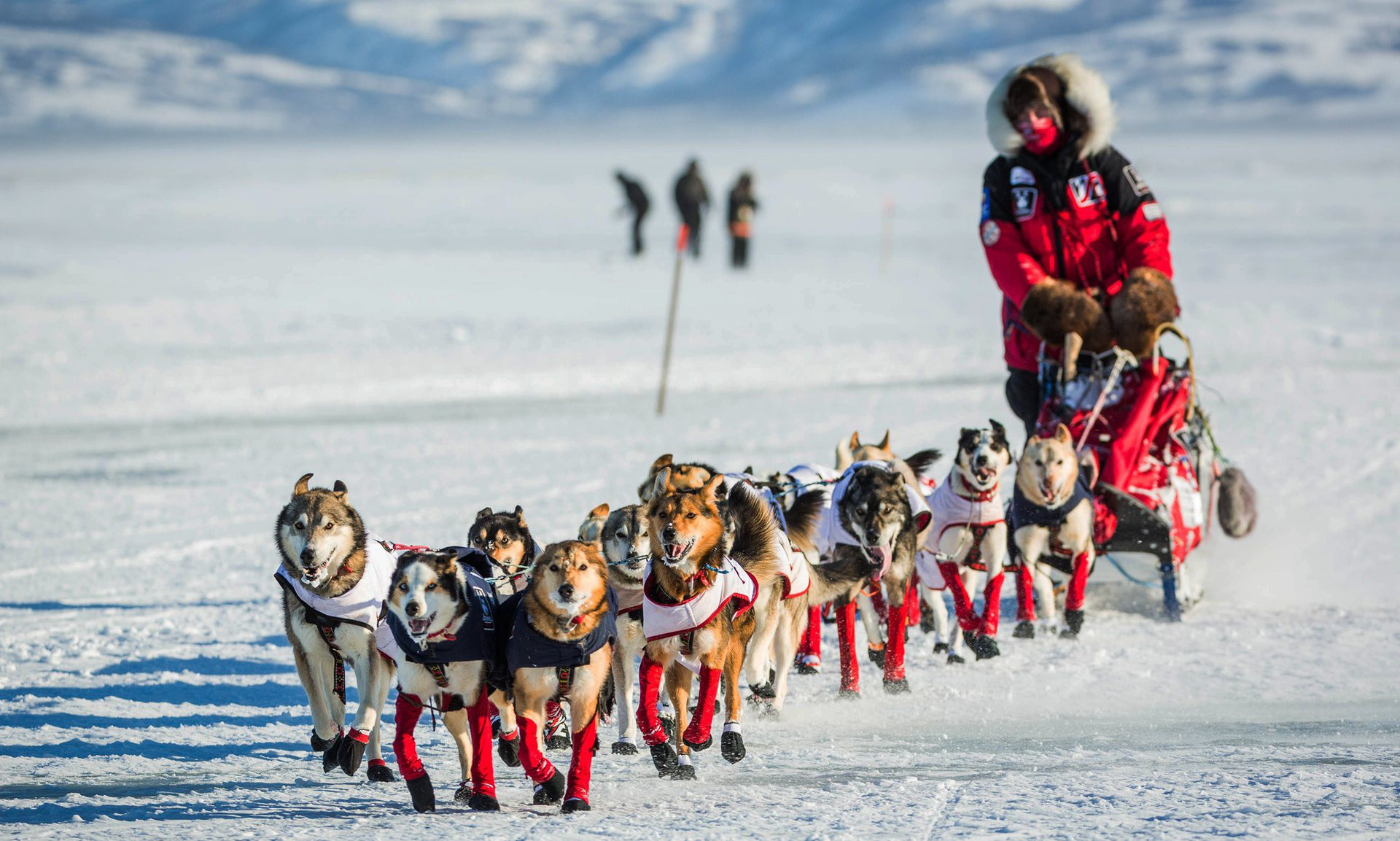 Alaska Sled Dog Racing 21