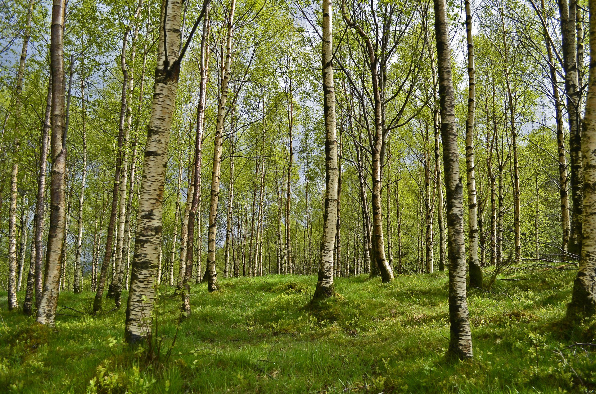 How to get a forest for construction