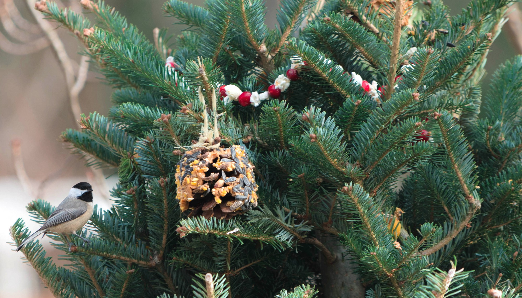 Recycling Christmas Trees for Wildlife – Updates from the U.S. Fish ...