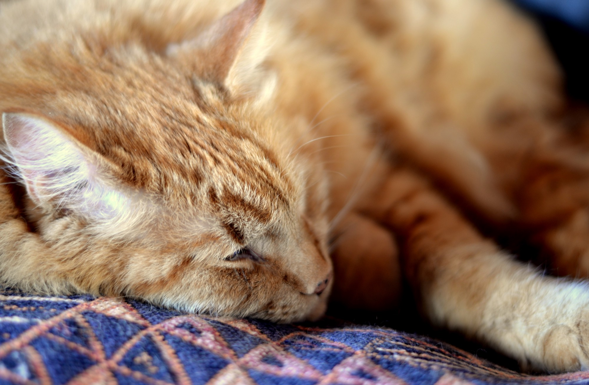 How to care for an older cat – Chilled Cat – Medium