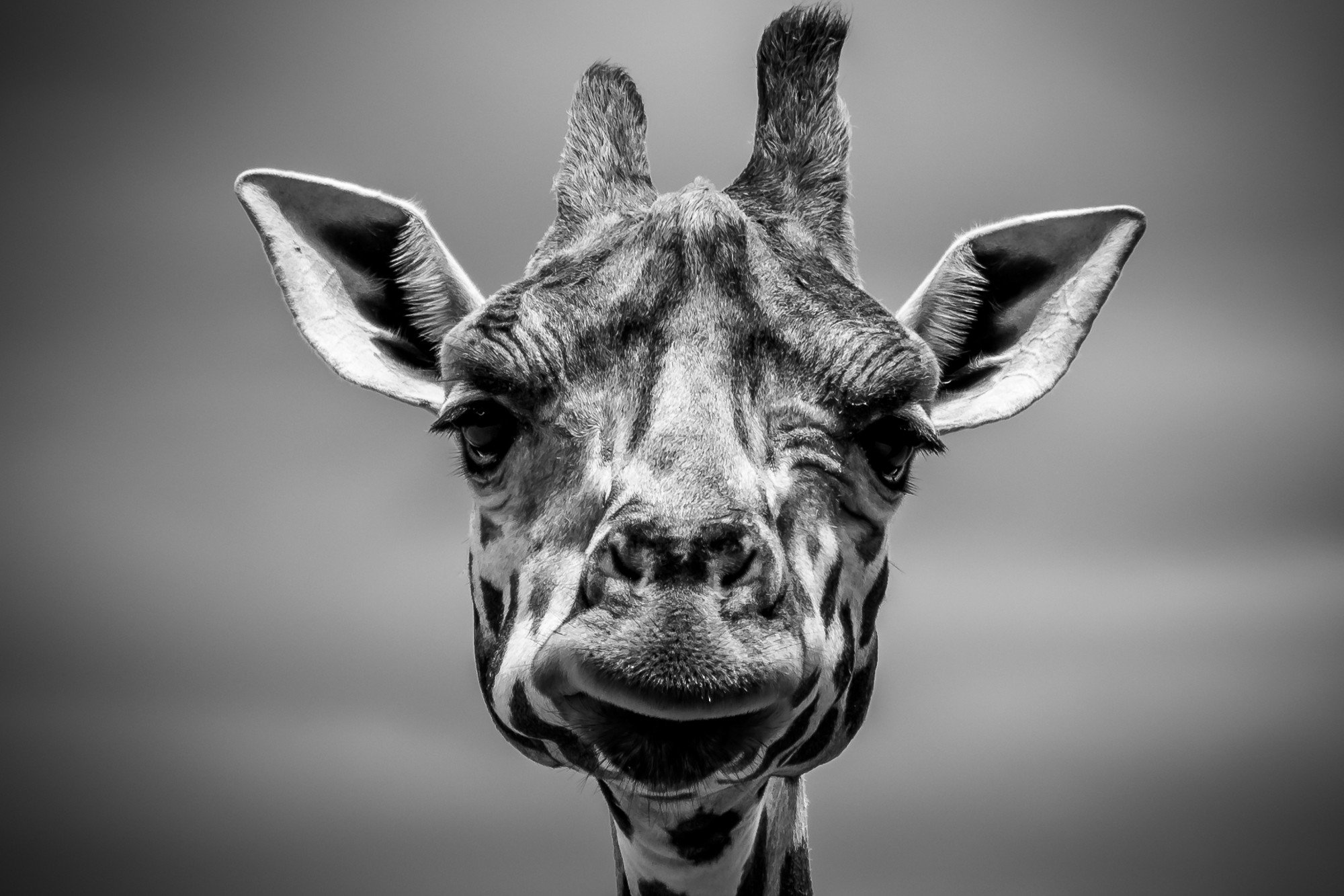 What the hell does minimum viable product actually mean anyway confused about mvp youre not alone this giraffe is too image credit matt mccaslin biocorpaavc Gallery