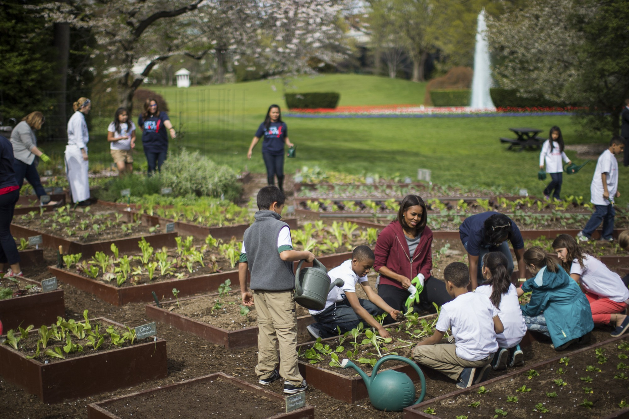 When A School Garden Doesn T Grow Bright Magazine