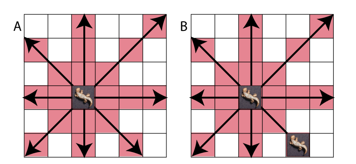 Figure 1 A The Baby Lizard Can Attack Any Other In Red Square Thus It Be Seen That Eat Another To Its Top Bottom