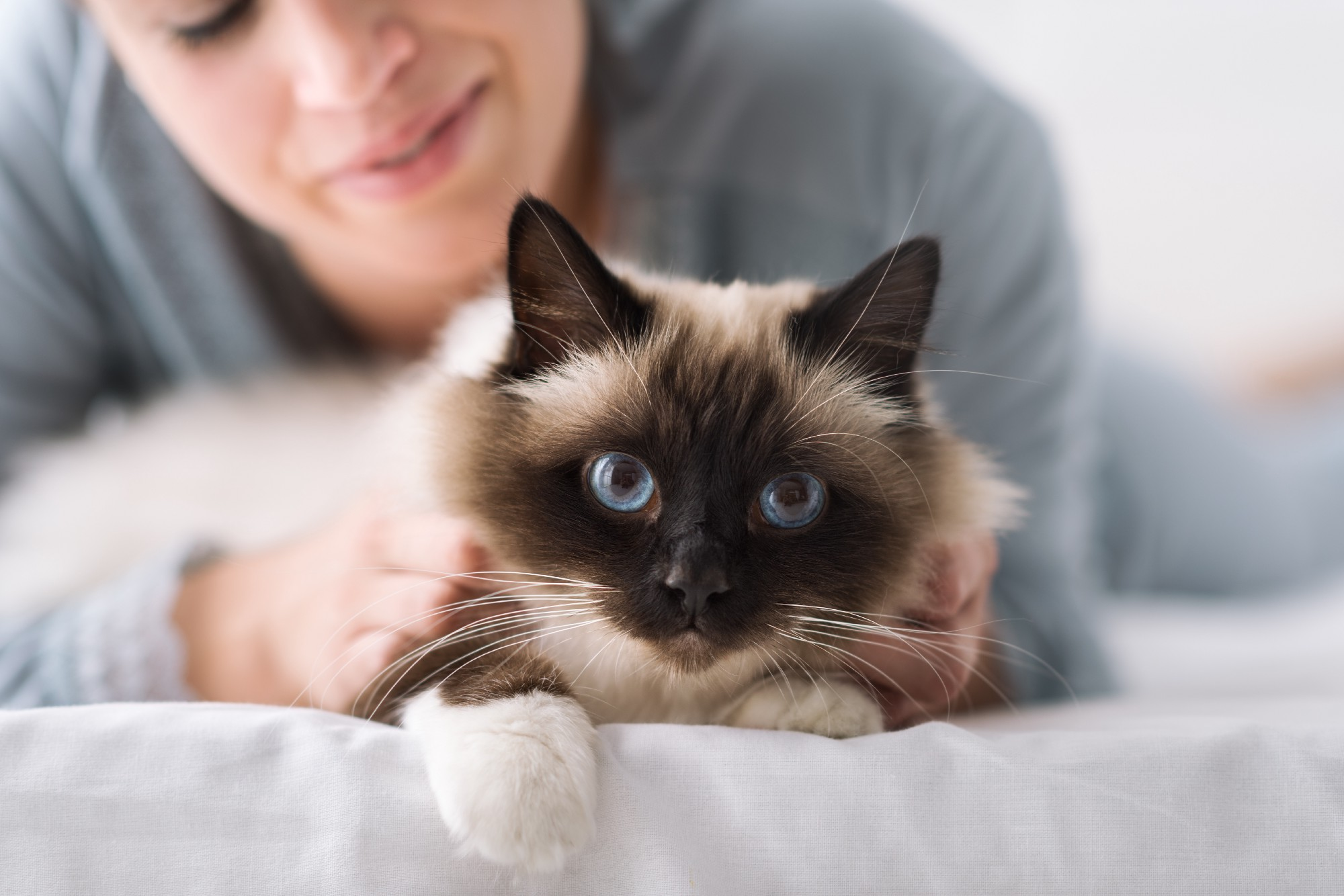 Cat and owner together