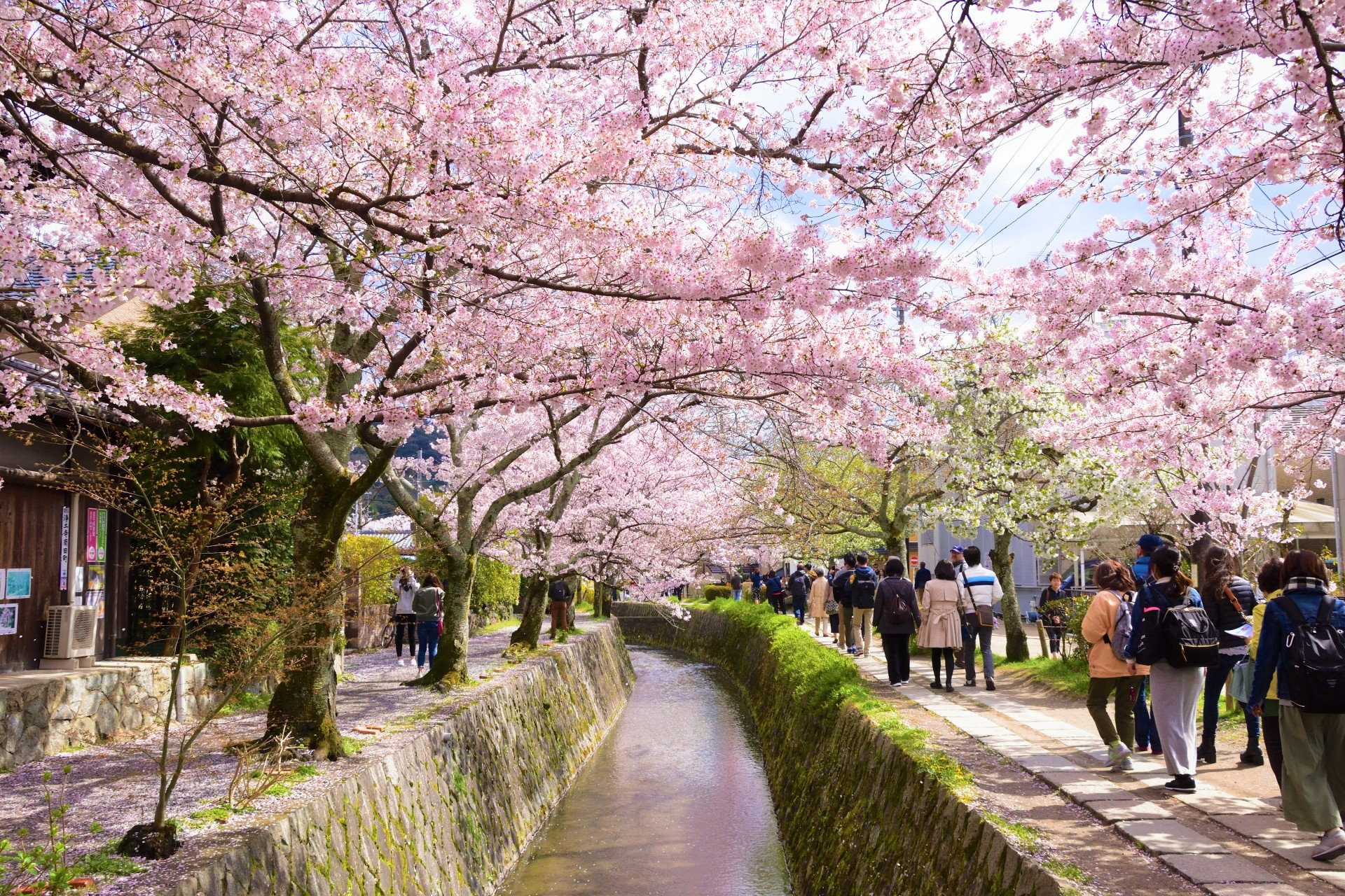 Image result for philosopher path kyoto cherry blossom