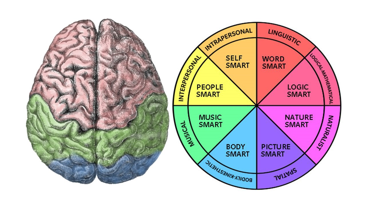 multiple intelligences — a different way to look at your abilities