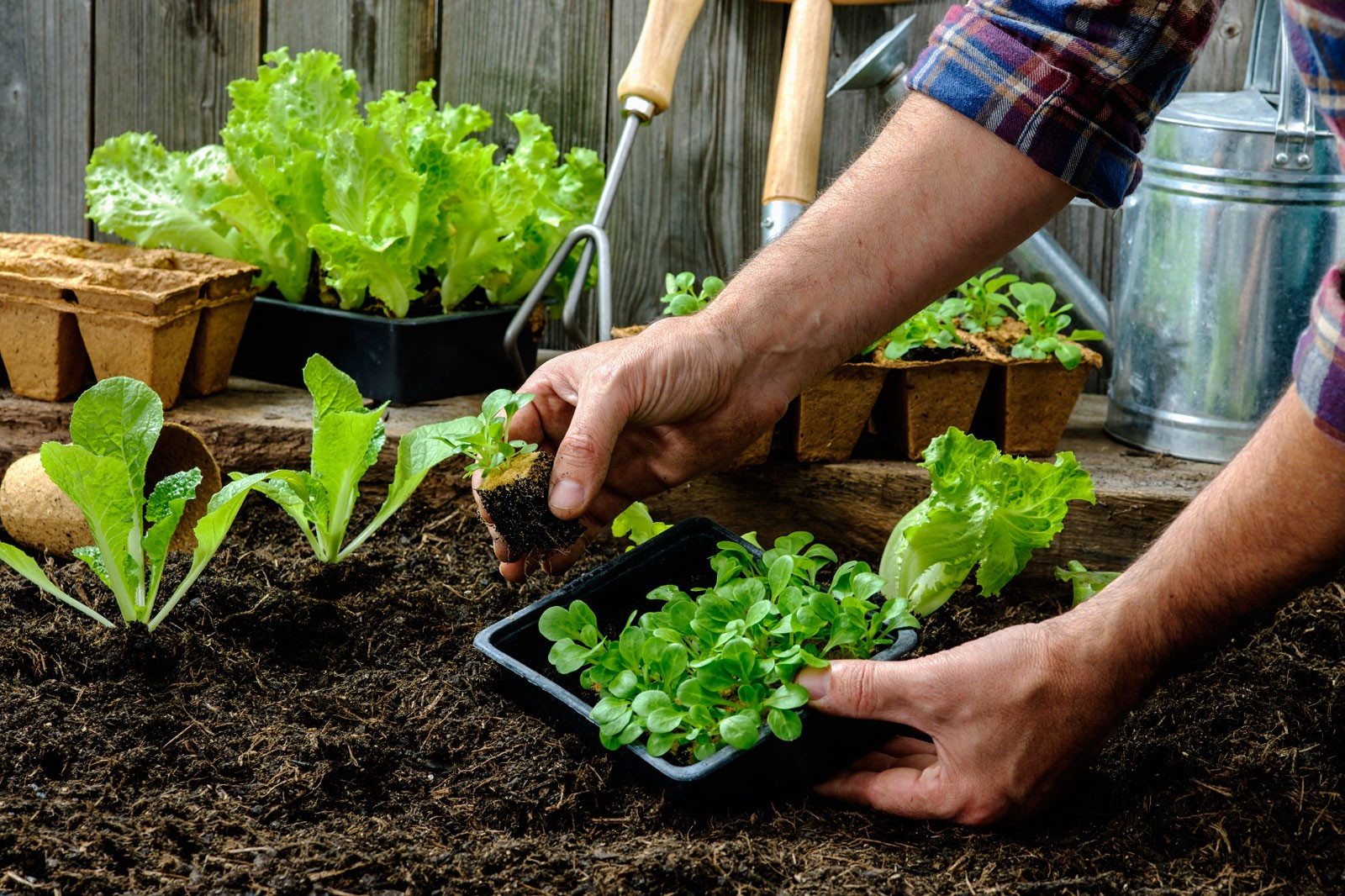 104 little tips to make and save money better humans growing your own vegetables and herbs takes some continuous effort and has a learning curve but it can be worthwhile and fun for your family to be able to fandeluxe Images