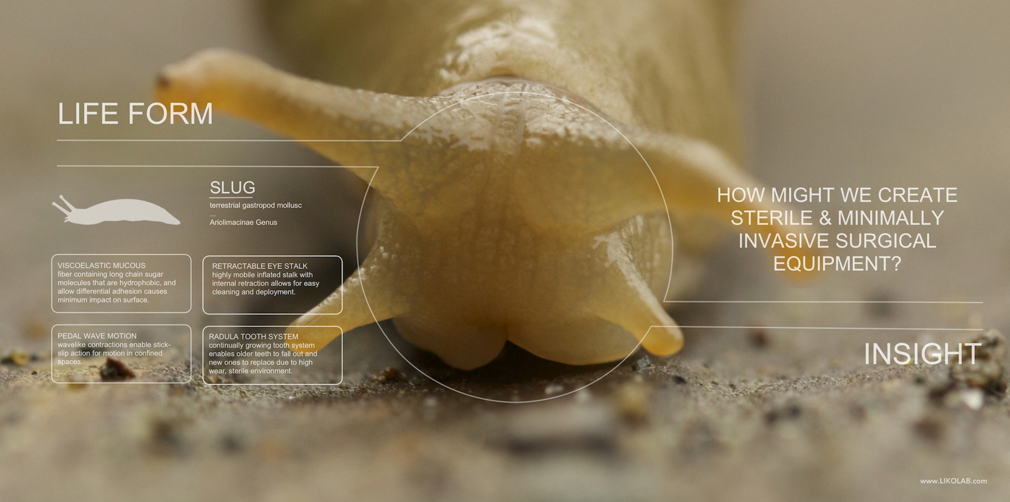 biologically inspired design bid or biomimicry can sound intimidating but with the following diy kit you will be able create a pair of biomimicry