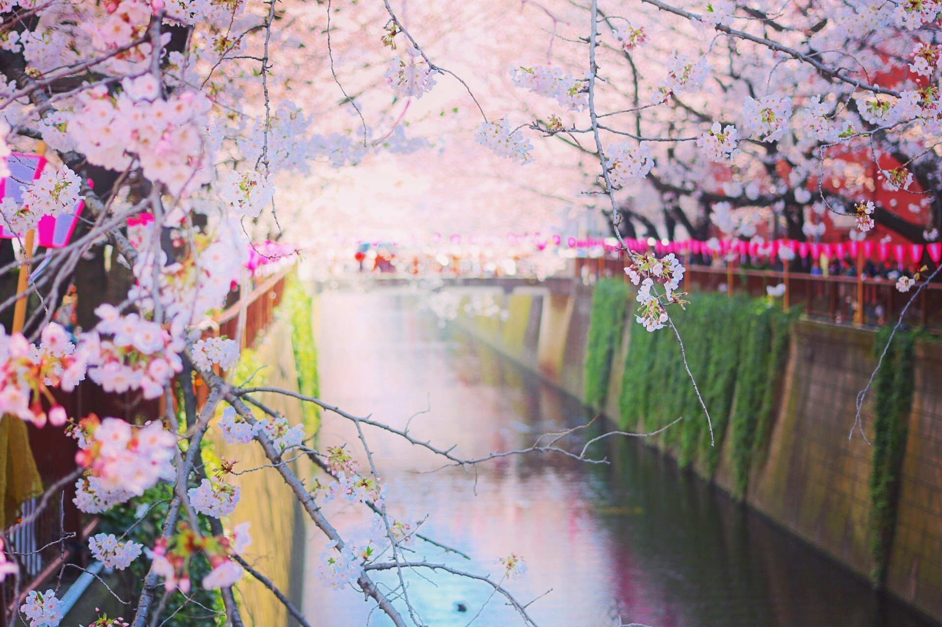 Spring In Japan 10 Best Things To Do In 2019 Japan Travel Guide