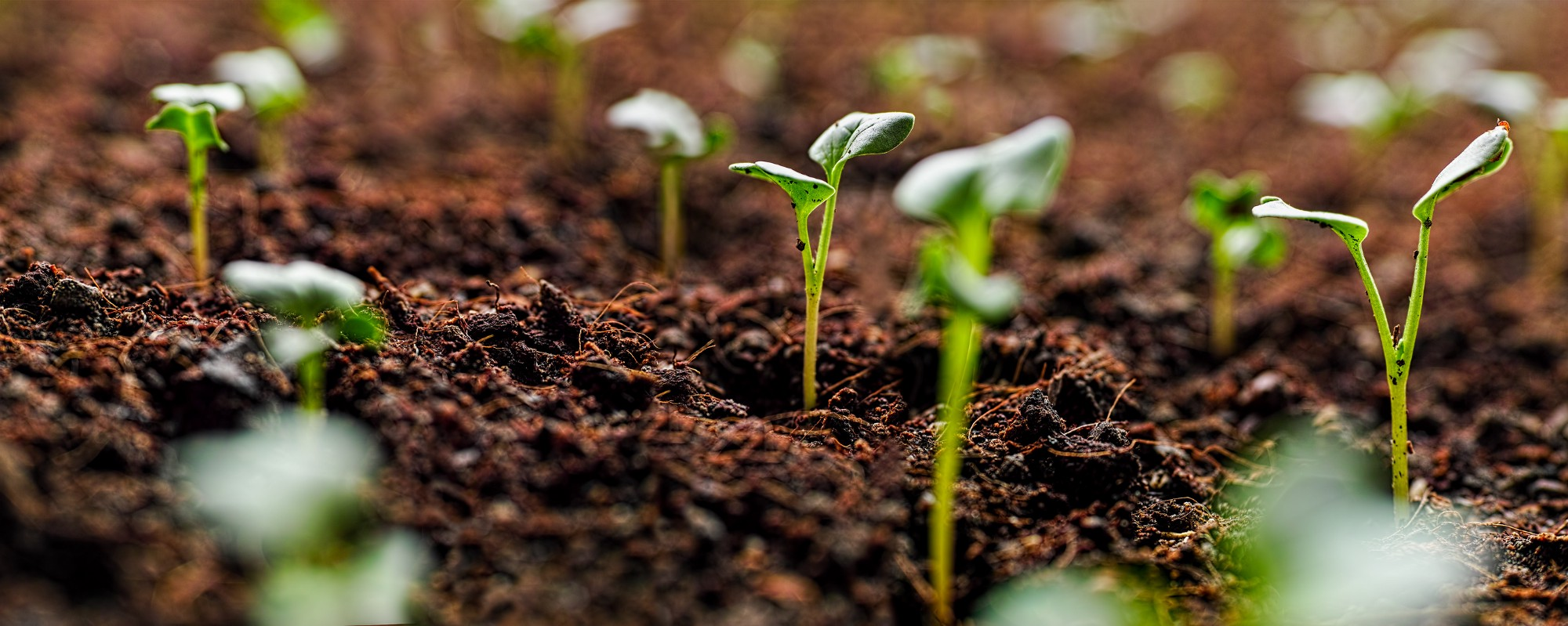 Healthy food starts with healthy soil nestle usa medium for Soil our life