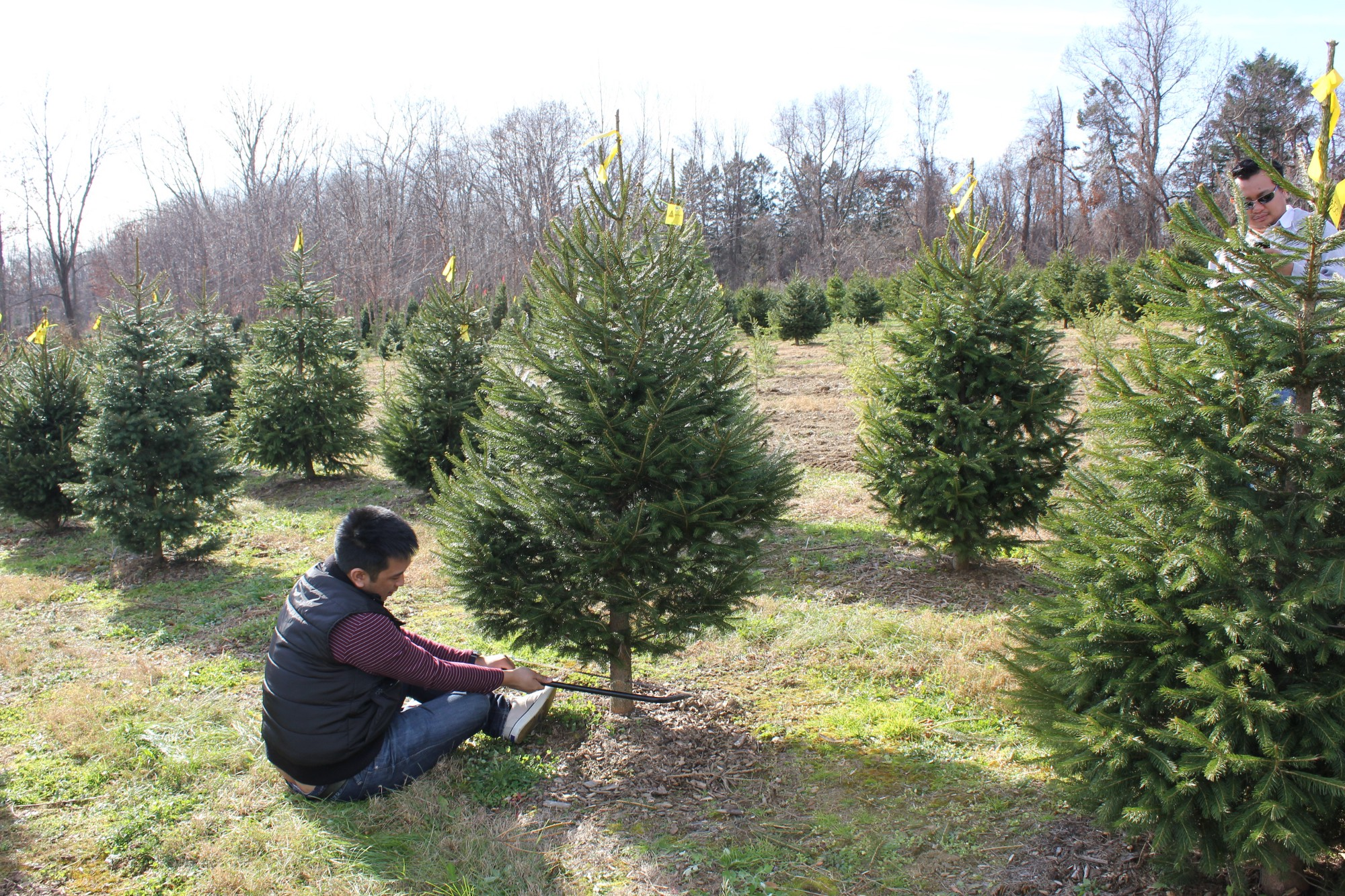 eight things to buy instead of that overpriced christmas tree - Charlie Brown Christmas Tree For Sale