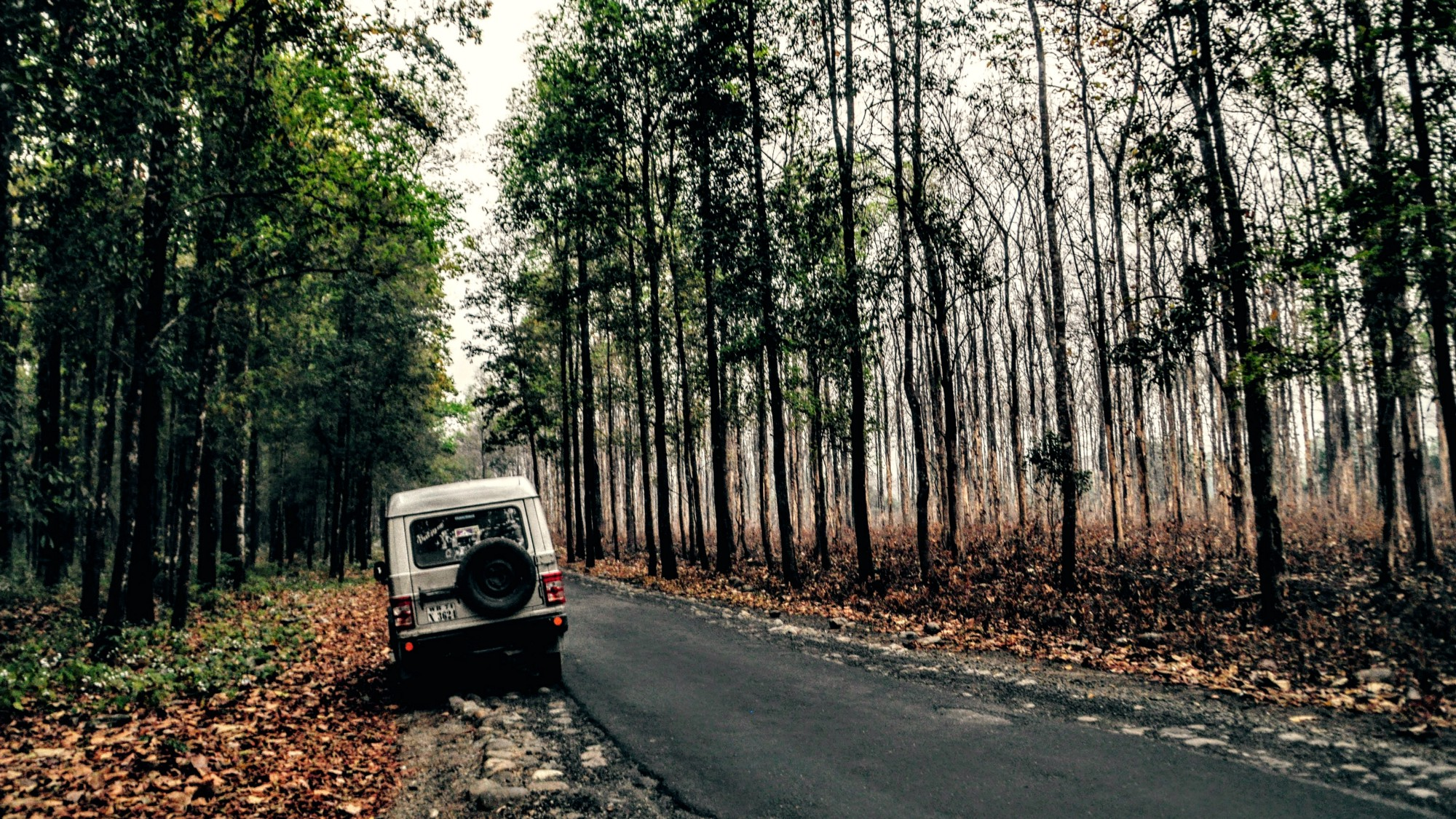 Explore North Bengal Stays and Routes