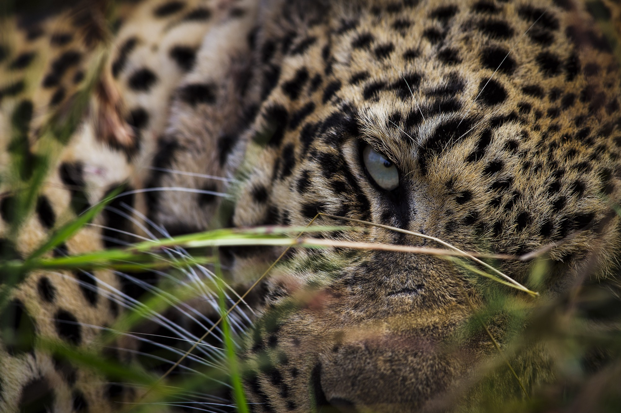 Watch How to Be a Wildlife Photographer video