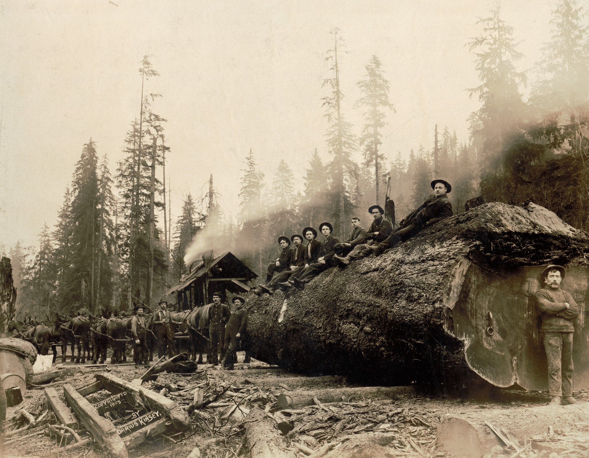 Early logging photos show the taming — and tarnishing of