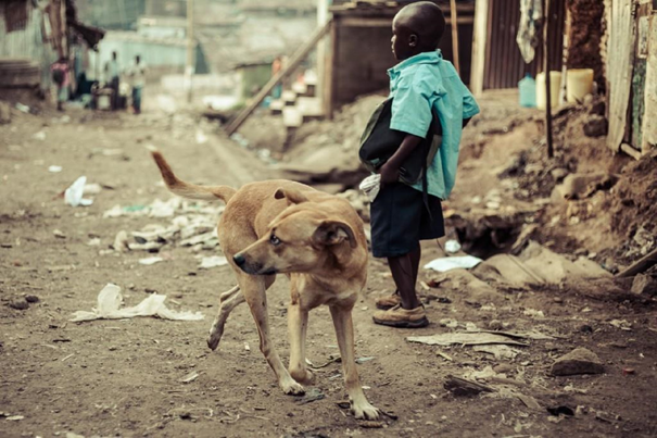 A dog explores the slum, looking for food