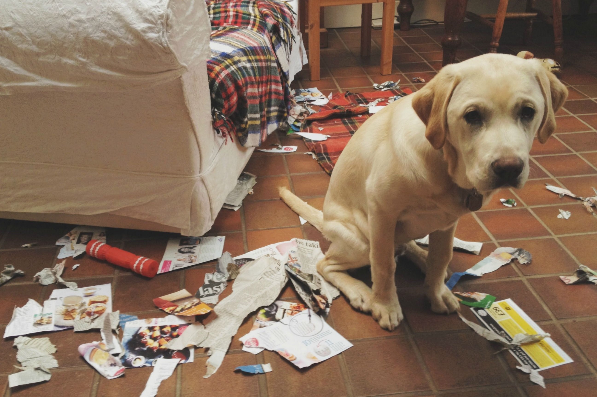 pics Dogs dont experience guilt