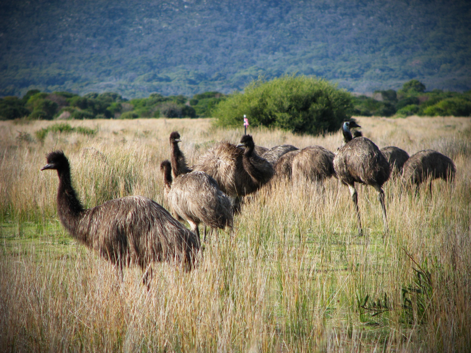 australia once lost a war with the mighty emu war is boring medium