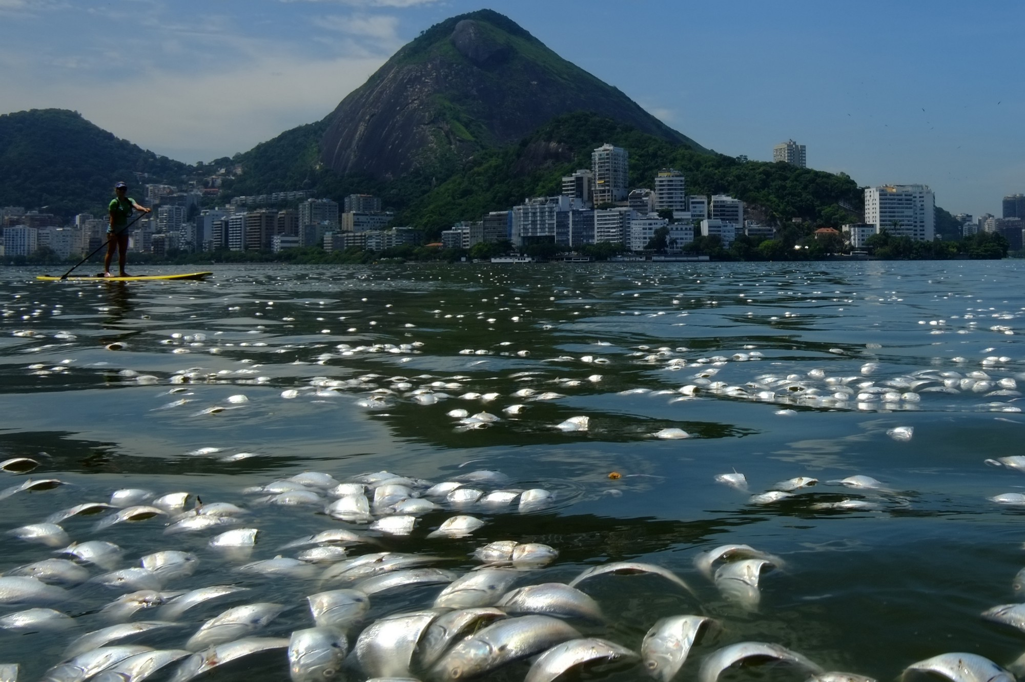 a look at s polluted waters pacific standard tons of dead fish float on the waters of the rodrigo de freitas lagoon in rio de janeiro photo christophe simon afp getty images