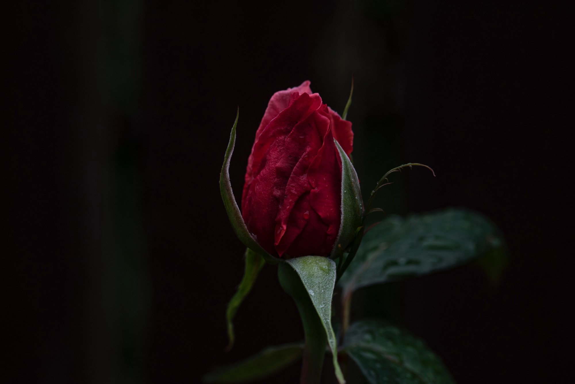 12 Things I Learned About Love When My Husband Died On Valentines Day