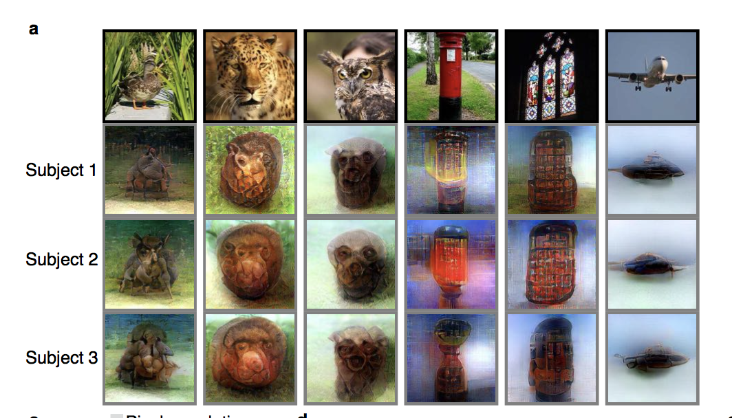 Different subjects reconstructed conscious experience of 6 different images. Note that the images here are in ImageNet dataset used to train the model, so they're a bit higher quality than arbitrary images (however, arbitrary images work too). [Source](https://www.biorxiv.org/content/biorxiv/early/2017/12/30/240317.full.pdf)