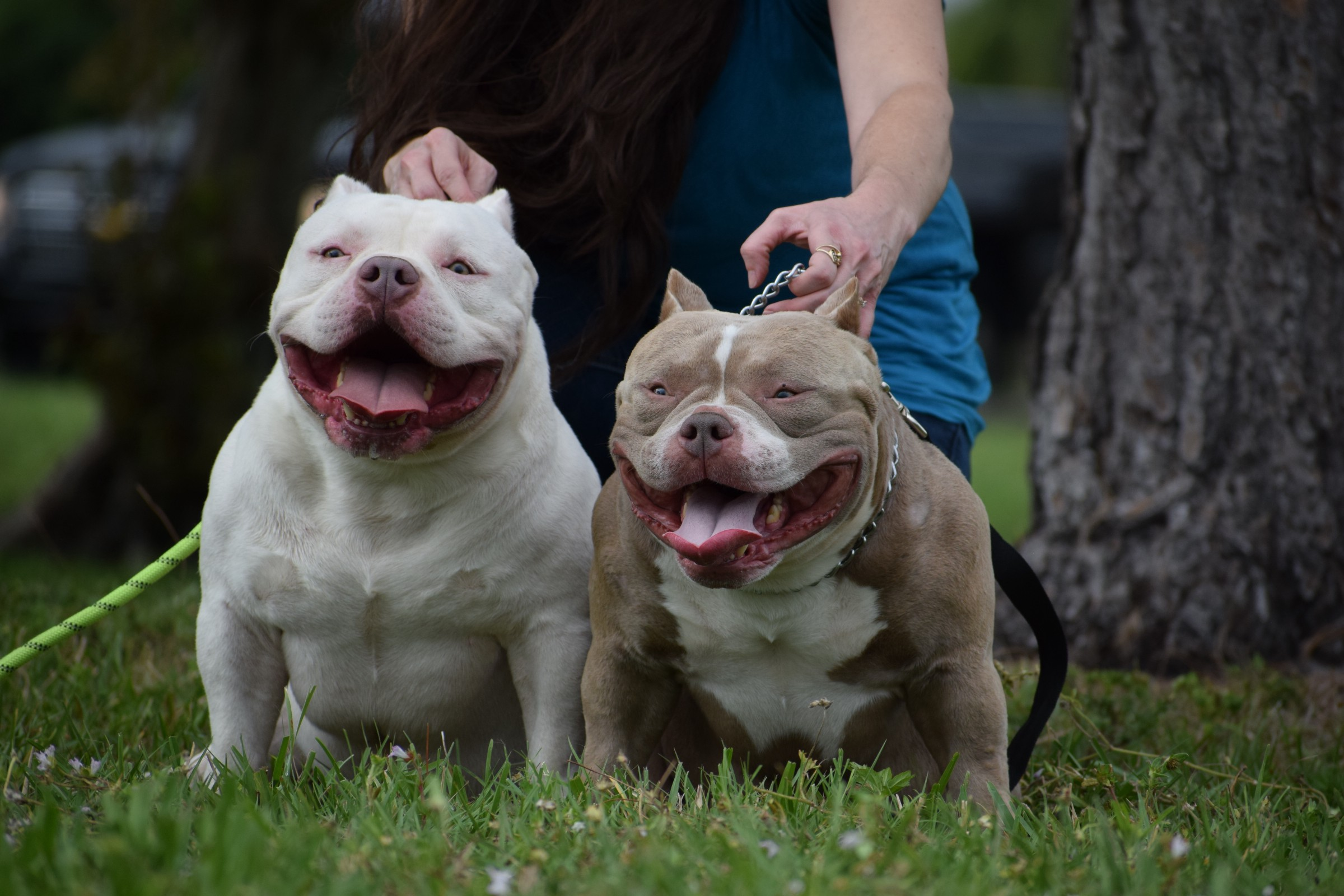 TOP POCKET BULLIES LOUIS V LINE'S VENOM & OMEGA MEET