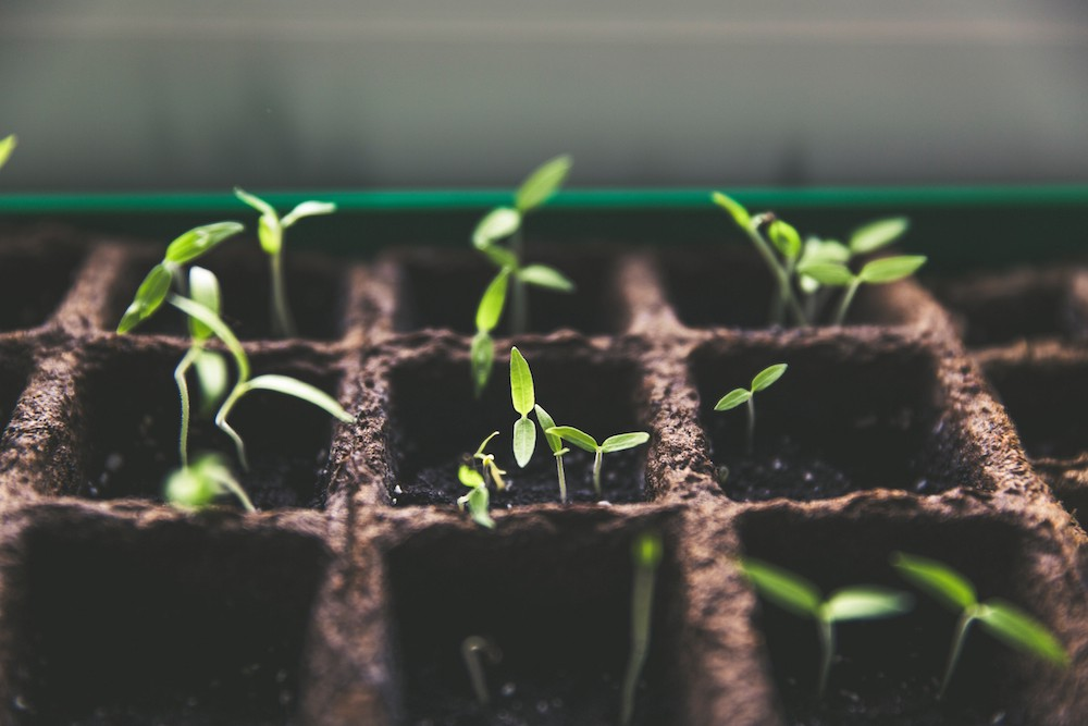Growing Your Own Can Mean Much More Than The Convenience Of The Freshest  Fruit, Vegetables And Herbs At Your Fingertips. After Seeing Your First  Misshapen ...