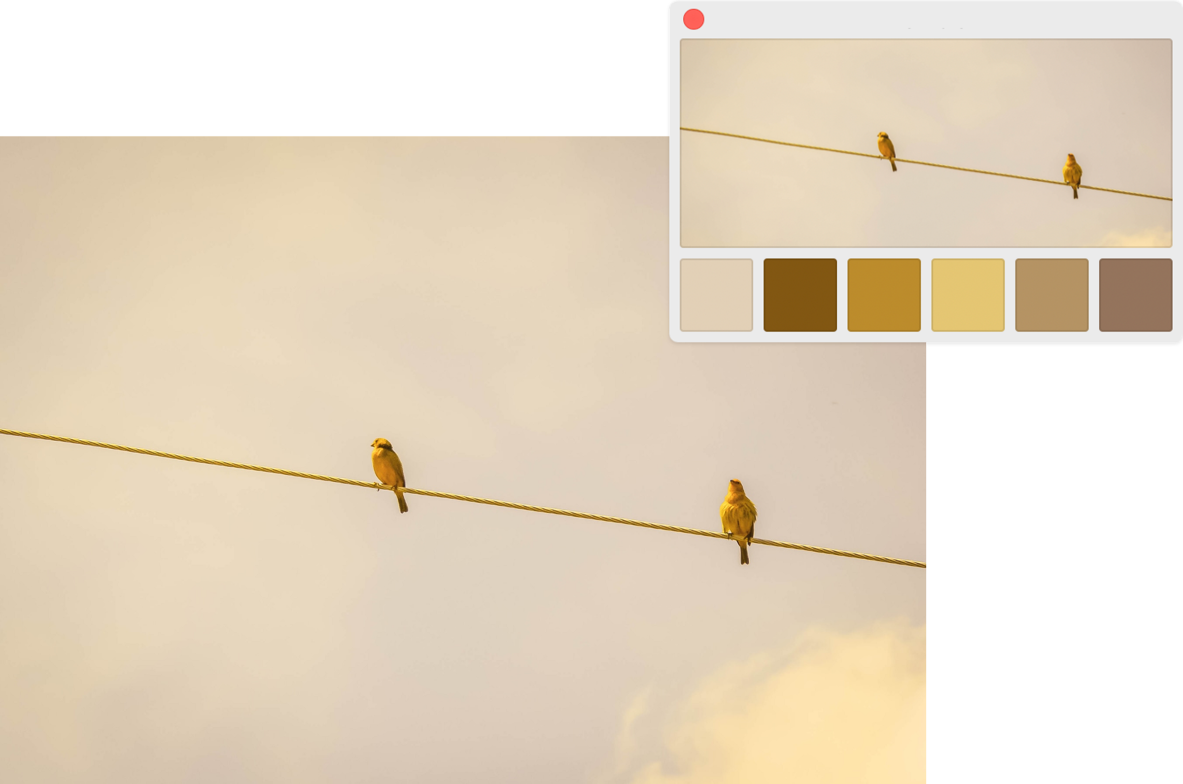 UI Color tips—How to create a color palette from an image.