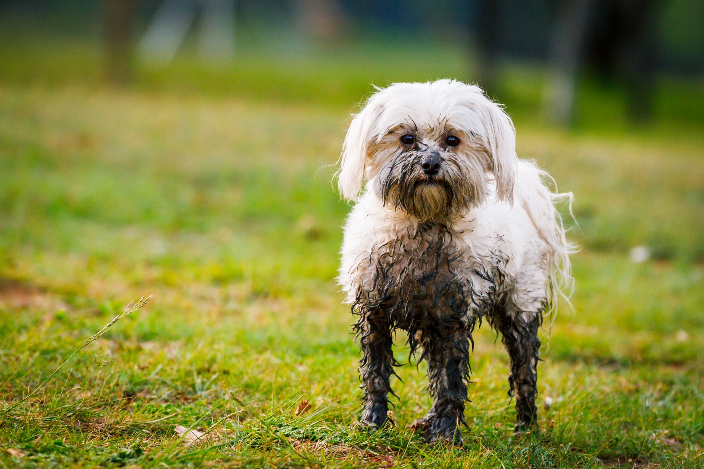 Your Itchy Dog May Need a Poop Pill