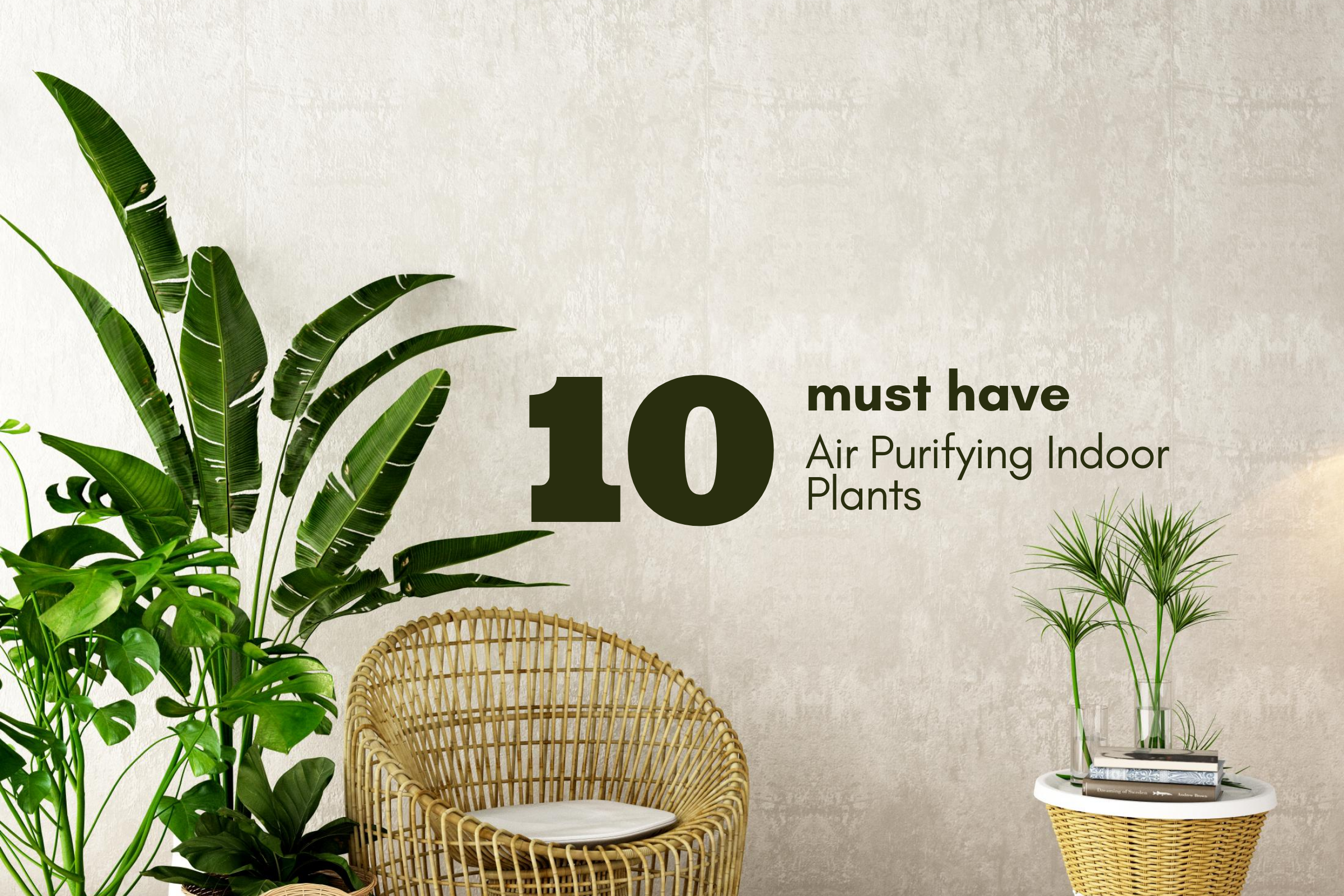 10 Must Have Air Purifying Indoor Plants Recommended by NASA