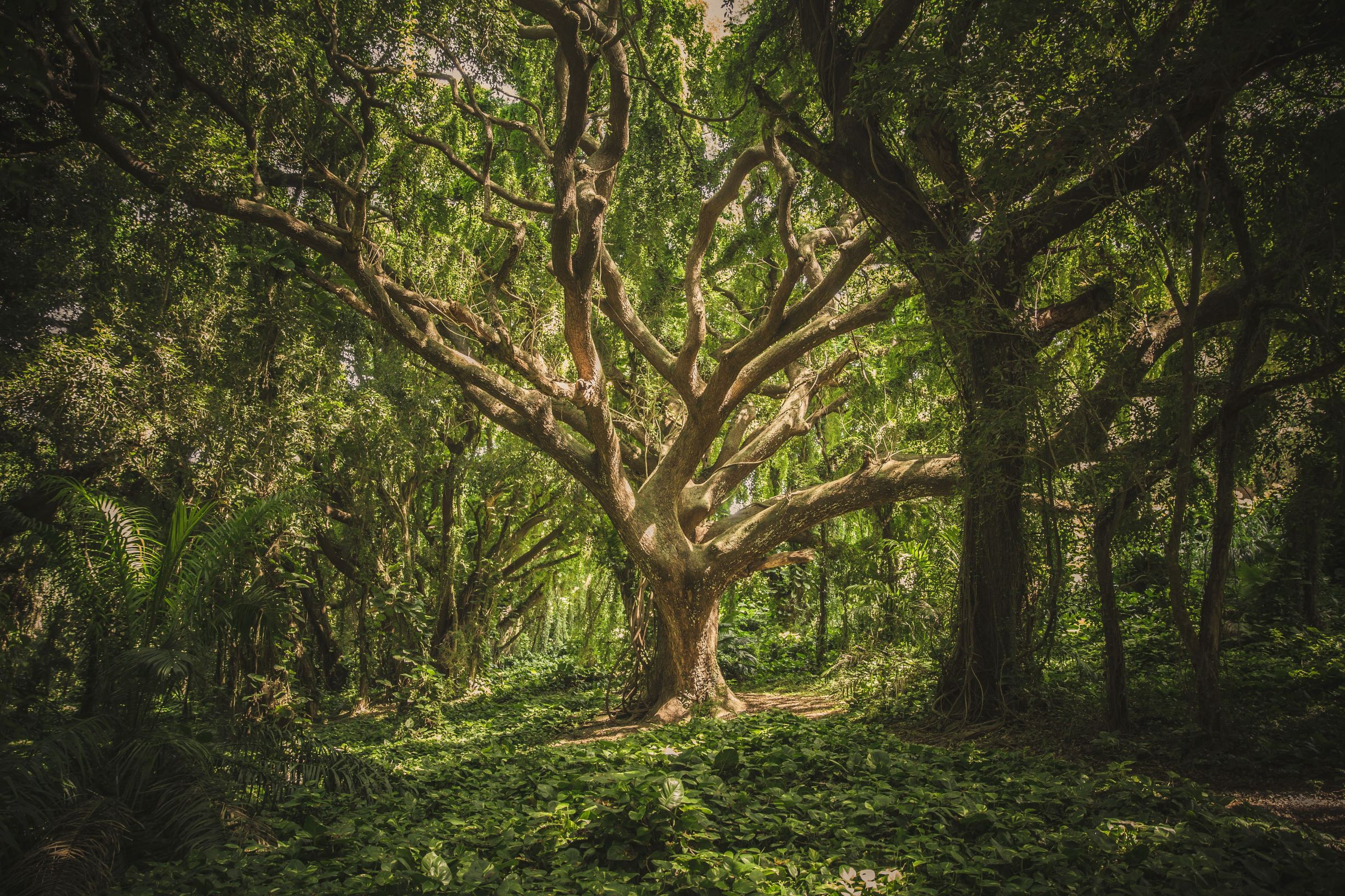 How do Decision Trees and Random Forests Work?