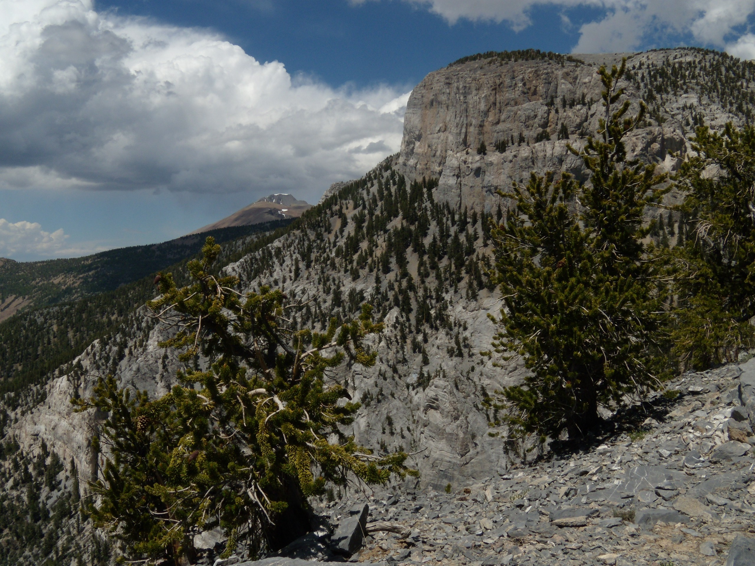 The Long Now Foundation and a Great Basin Mountain Observatory for Long Science