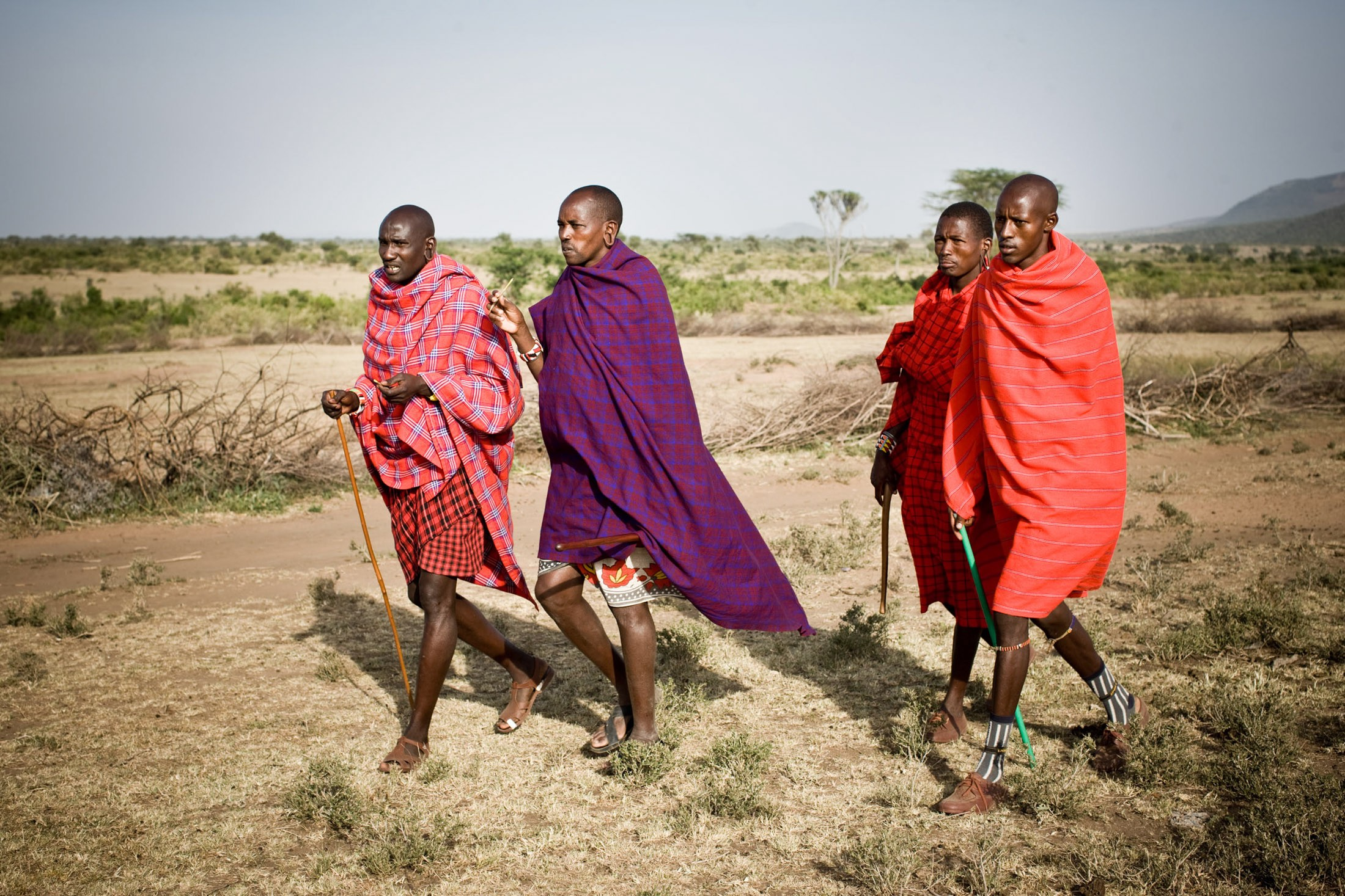 The seminomadic Maasai move their livestock to fresh pastures based on seasonal rotation, but as droughts become more severe in East Africa with climate change, many herders are being forced to seek alternate livelihoods.