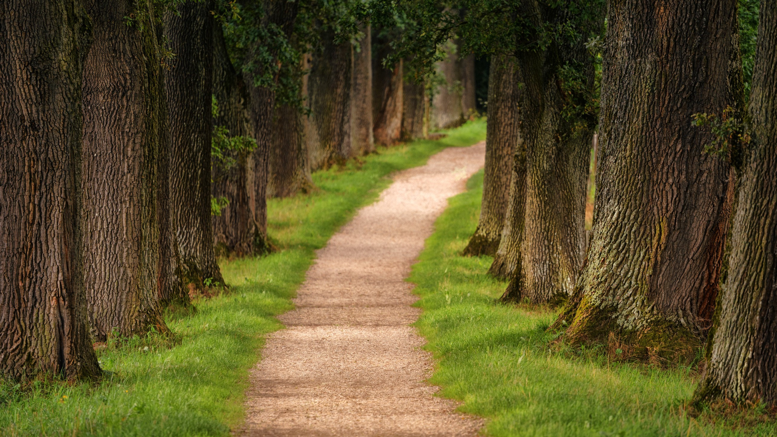 4 Pathways to Data Science