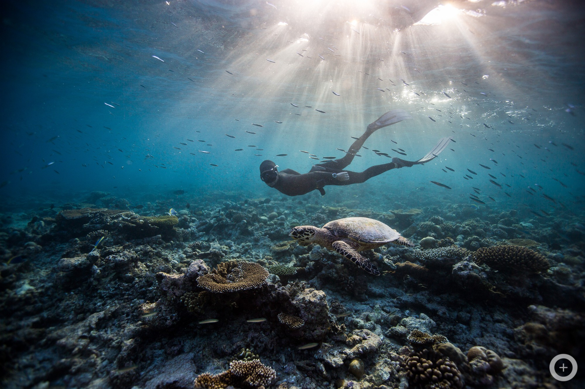 Meet the Freediving Couple Who Make Stunning Underwater ...