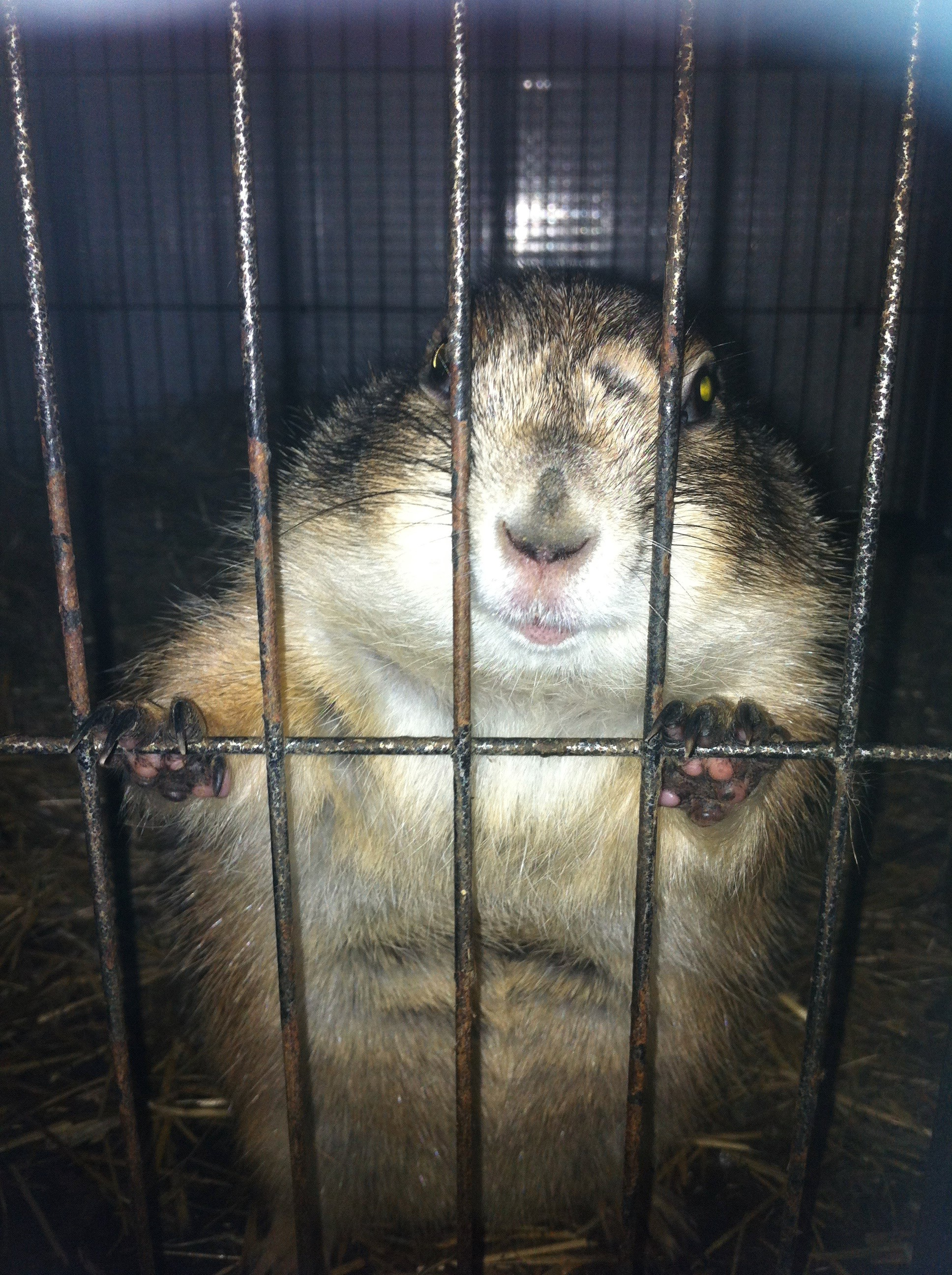 One Of The Best Pets I Ever Had Chichi The Prairie Dog