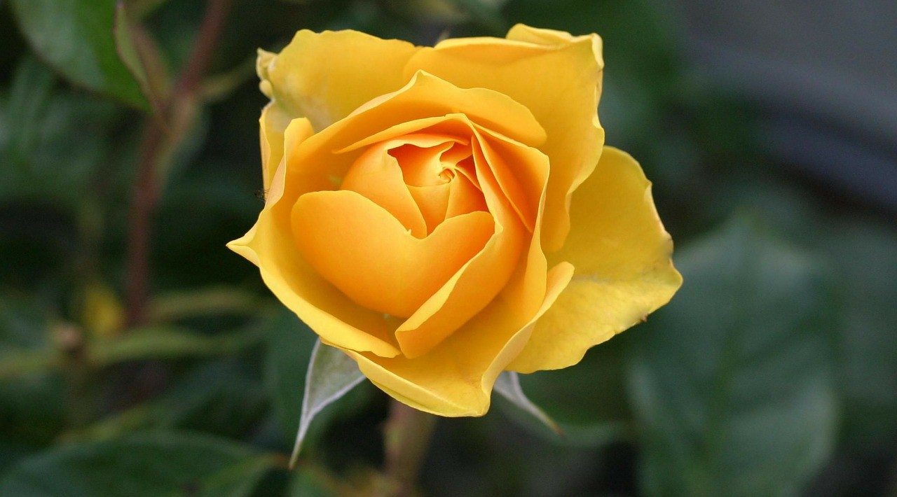 Who Was The Yellow Rose Of Texas The Alamo Medium