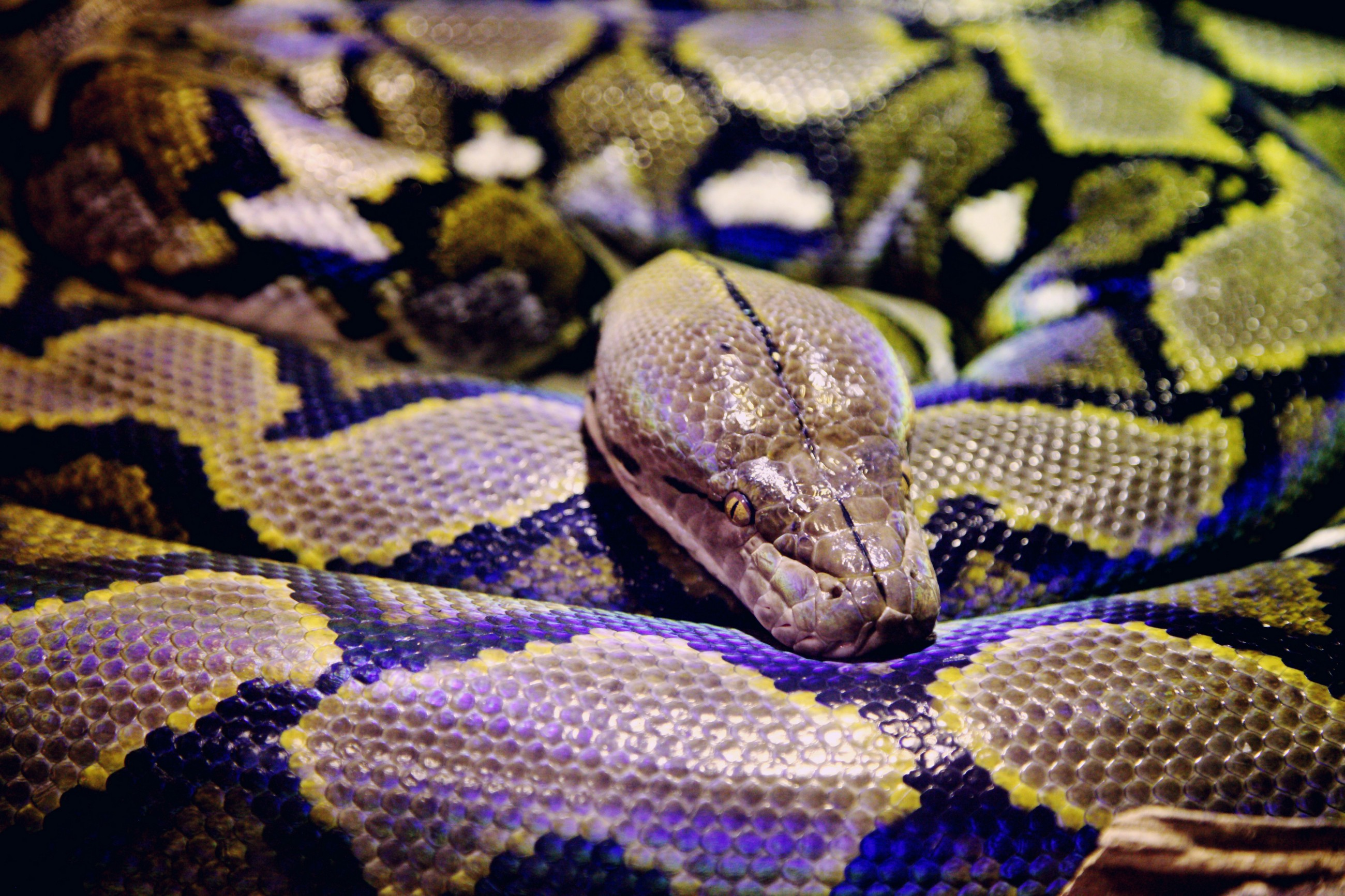 Python: A Snake That Loves Objects