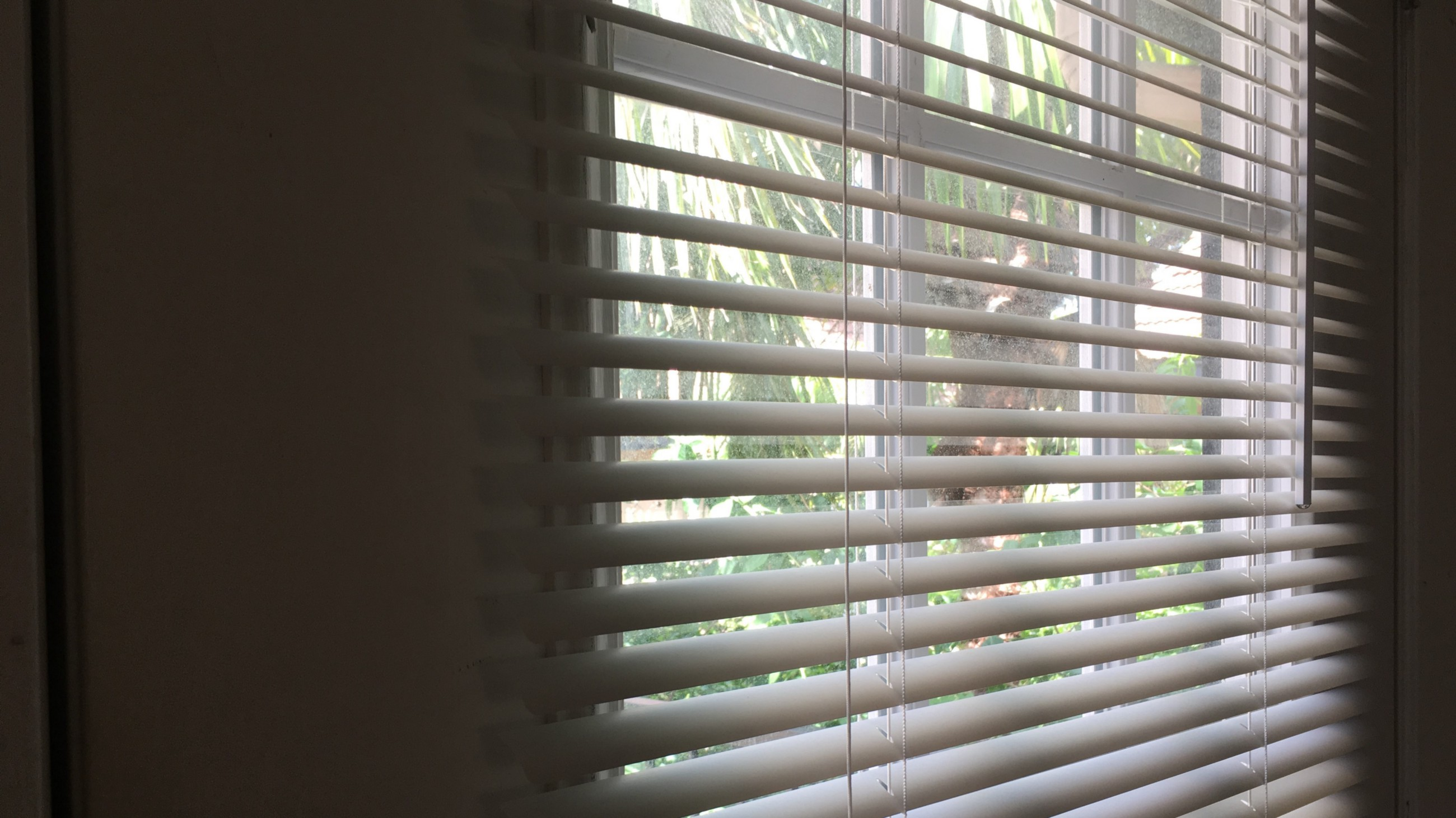 Pvc Particularly Very Concerning Window Blinds Treeusable 2018