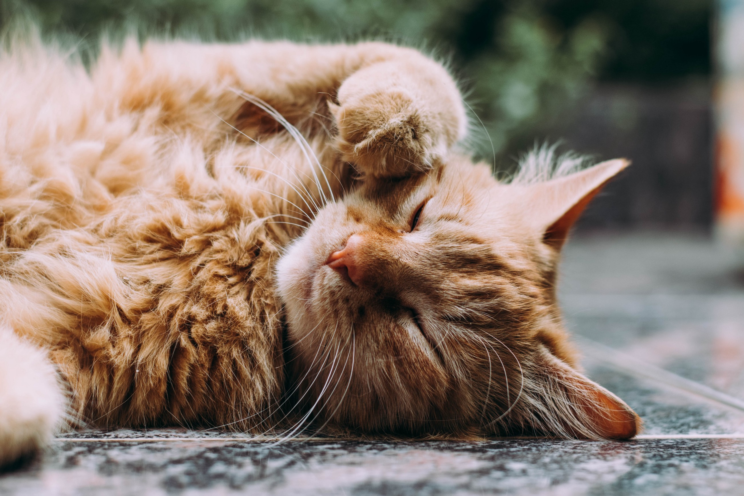 Benefits of the CatBoost Machine Learning Algorithm