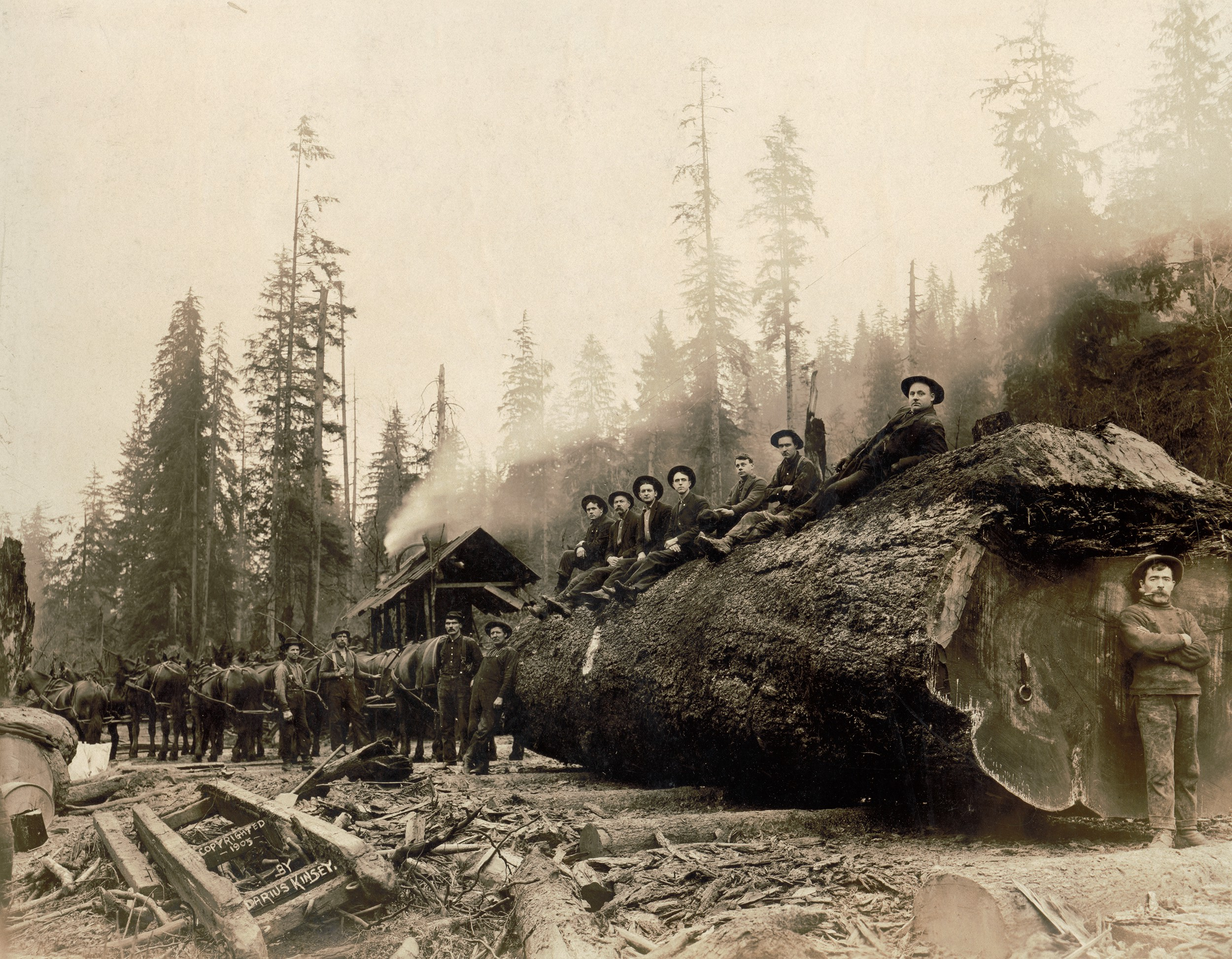 Early Logging Photos Show The Taming And Tarnishing Of