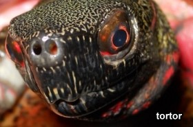 Image result for spooky turtle