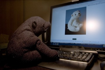 Photo of teddy bear staring at another bear on a computer